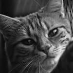 亡くなった飼い猫にまつわる不思議な体験